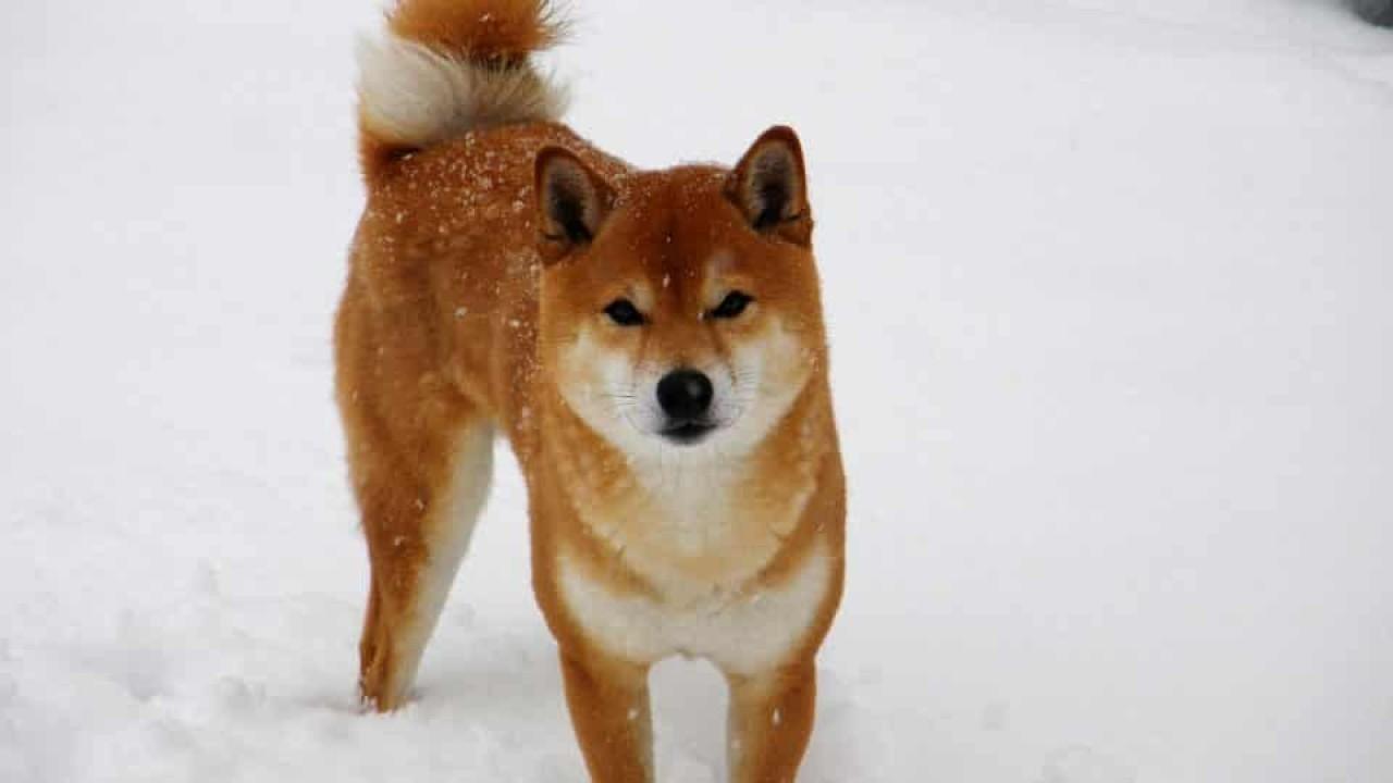 The Hokkaido