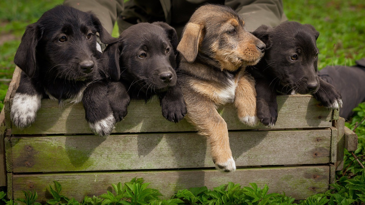 Should You Buy a Dog Without a Pedigree?