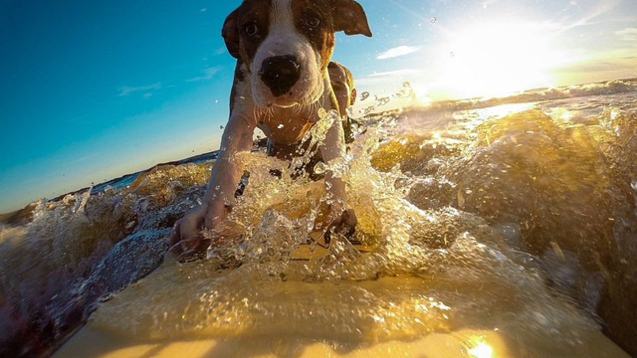How to keep your dog cool