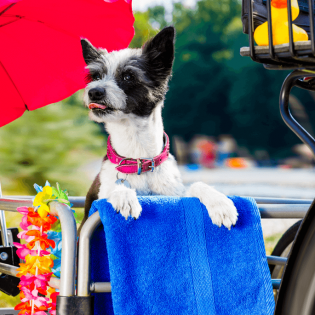 Best Dog Bike Trailers [2021 Review]