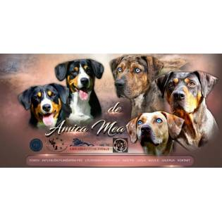 De Amica Mea Dams World Dog Finder Buy Or Adopt Dogs