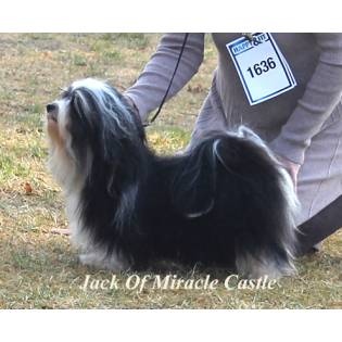 Jack Of Miracle Castle