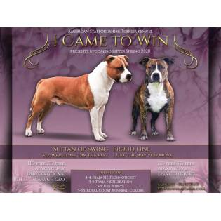 """""""C"""" litter I Came to Win Kennel"""