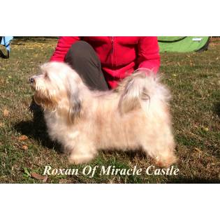 Roxan Of Miracle Castle