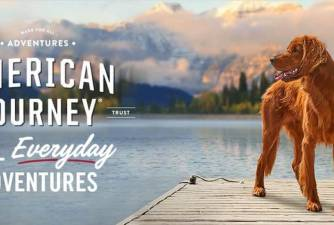 American Journey Dog Food Reviews [2021]