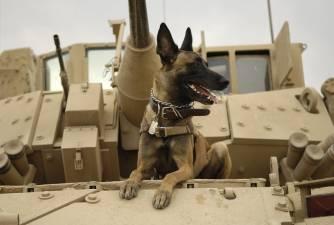 War Dogs Through History
