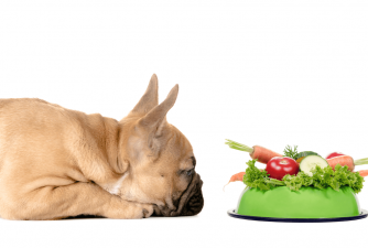 Top 10 List: Best Vegetables for Dogs