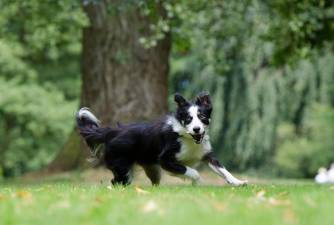 Is Drontal Plus for Dogs a Good Dewormer