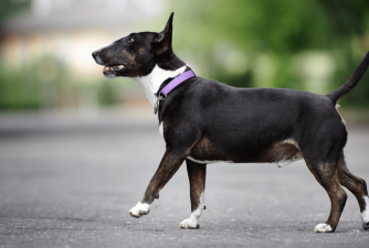 Are Martingale Collars Safe for Dogs?