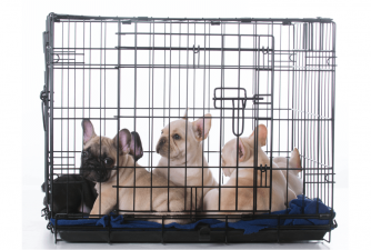 Is Your Puppy Crying in Crate - Here's What You Do