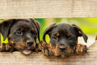 Tips For Buying a Puppy