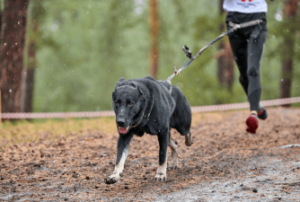 Canicross - an Ideal Sport for all Active Dogs & Their Owners