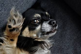 Metoclopramide for Dogs - Usage, Dosage, & Safety