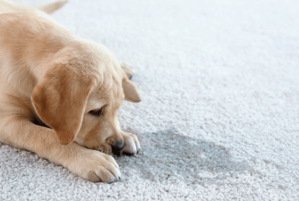 Best Carpet Cleaning Solution for Pets