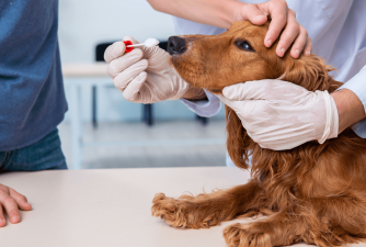 Cushing's Disease In Dogs: What You Need To Know