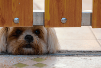 3 Top Rated Retractable Dog Gates