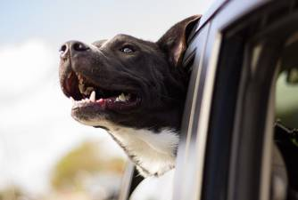 Can Dogs Take Prozac & is it Safe