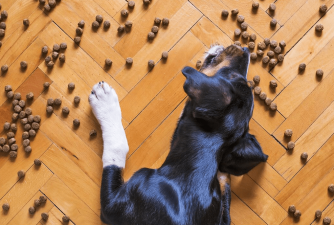 Best Dry Dog Food for Your Dog in 2021