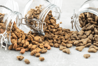 Best Dog Food Containers You Must Have In 2021
