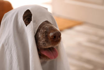 What the Science Says: Are Dogs Able to See Ghosts?