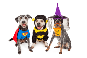 Dog Halloween Costumes for 2021