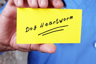 Which Heartworm Medicine Should You Pick