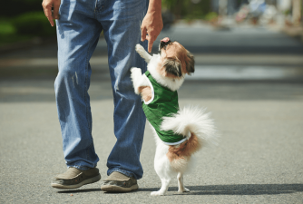 Teach Your Dog to Stop Jumping on People in 5 Easy Steps