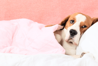 Pain Relief for Dogs: Natural & Safe