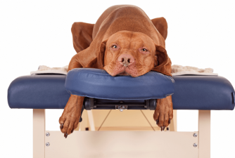 The Best Calming Treats for Dogs [2021 review]