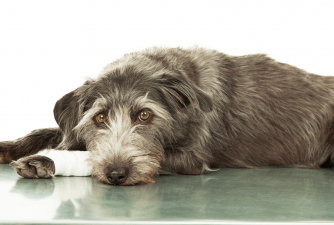 Neosporin on Dogs - Yes or No?
