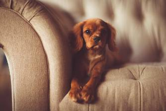 Phenobarbital for Dogs: Uses, Side Effects & Dosage