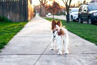 Rehoming a Dog - How to Do it Safely