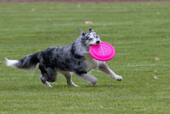 Dog Frisbee - How to Choose the Best for Your Dog