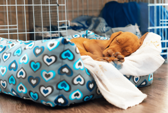 3 Best Large Dog Crate For You To Choose
