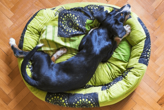 Best Dog Beds in 2021
