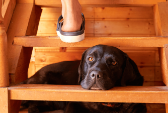 Dog Stairs for Bed - Buyers Guide for 2021