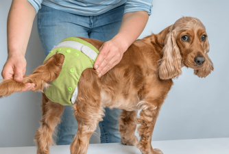 How to Choose the Best Dog Diaper?