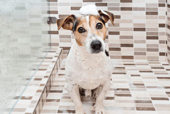 Best Flea Shampoo for Dogs [2021 Review]