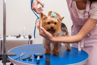 Best Dog Grooming Kits in 2021