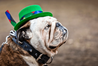 Top 6 Hats That Your Dog Will Love