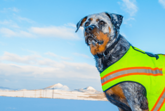 Best Dog Hunting Vests [2021 Review]