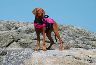 Should You Use Dog Life Jacket?