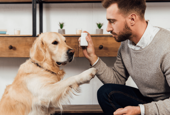 Vitamins for Dogs - When Are They Necessary?