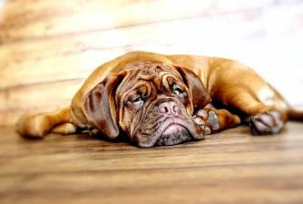 Female Dog Names and How to Choose One