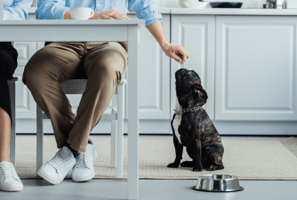 Complete Guide: Probiotics for Dogs