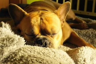 Dog Snoring - What Does it Mean