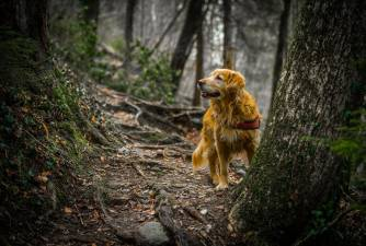6 Things to Look Out For in The Woods With Your Dog