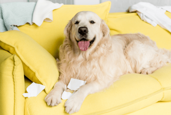 7 Tips to Get Rid of the Stinky Dog Odor at Home