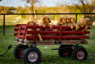 Dog breeders - Everything You Need to Know