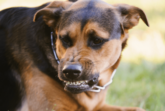 What Does Dog Growling Mean?